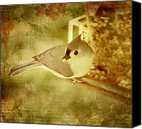 Bird On Feeder Canvas Prints - A Mouthful Canvas Print by Kathy Jennings