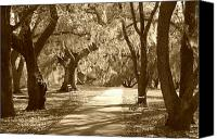 Park Benches Digital Art Canvas Prints - A Place for Contemplation in sepia Canvas Print by Suzanne Gaff