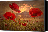 Appalachia Photo Canvas Prints - A Poppy Kind of Morning Canvas Print by Debra and Dave Vanderlaan