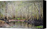 Florida Nature Photography Canvas Prints - A Quiet Back Woods Place Canvas Print by Carolyn Marshall
