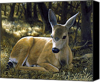 Mule Deer Canvas Prints - A Quiet Place Canvas Print by Crista Forest