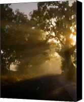 Trees Canvas Prints - A Road less Traveled Canvas Print by Mike  Dawson