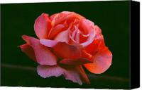 Floral Canvas Prints - A Rose For Rose Canvas Print by Michael Durst