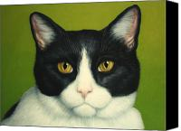 White Canvas Prints - A Serious Cat Canvas Print by James W Johnson