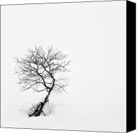 Barren Canvas Prints - A Simple Tree Canvas Print by David Bowman