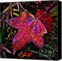 Judi Bagwell Canvas Prints - A Single Sweetgum Leaf Canvas Print by Judi Bagwell