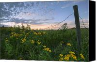 Barbed Wire Fences Photo Canvas Prints - A Summer Evening Sky With Yellow Tansy Canvas Print by Dan Jurak