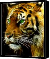 Unique Photo Canvas Prints - A Tigers Stare Canvas Print by Ricky Barnard