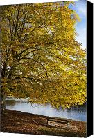 Park Benches Photo Canvas Prints - A Tree With Golden Leaves And A Park Canvas Print by John Short