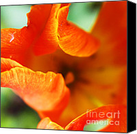 Artyzen Studios Canvas Prints - A tulip for OKeefe Canvas Print by Anahi DeCanio