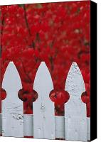 Middle Town Pennsylvania Canvas Prints - A White Picket Fence Against Red Autumn Canvas Print by Lynn Johnson