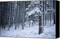 Snow Scenes Photo Canvas Prints - A winter view of the Canvas Print by Taylor S. Kennedy