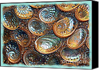 Abalone Seashell Canvas Prints - Abalones Canvas Print by Judi Bagwell