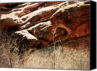 Garden Of The Gods Canvas Prints - Above the Treetops Canvas Print by Lenore Senior