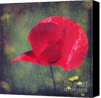 Red Flowers Canvas Prints - Abstract poppy Canvas Print by Angela Doelling AD DESIGN Photo and PhotoArt