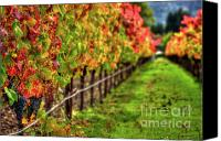 Blue Grapes Canvas Prints - Abundant Fall Rows Canvas Print by Mars Lasar