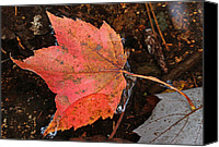 Leaf Pile Photo Canvas Prints - Acadia Melancholy Canvas Print by Juergen Roth