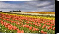 Vernon Canvas Prints - Across colorful fields Canvas Print by Mike  Dawson