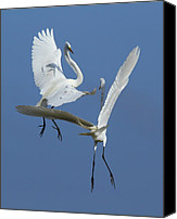 Great Egret Canvas Prints - Aerial Ballet Canvas Print by Andrew McInnes