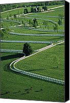 Farm Scenes Canvas Prints - Aerial View Of Donamire Farms Fenced Canvas Print by Melissa Farlow