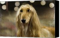 Hound Canvas Prints - Afghan Canvas Print by Rebecca Cozart