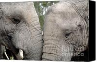 Elephants Canvas Prints - African Elephants Canvas Print by Neil Overy