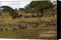 On-the-look-out Canvas Prints - African Herds on the Move Canvas Print by Darcy Michaelchuk