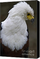 Portrait Pyrography Canvas Prints - African sea eagle 5 Canvas Print by Heiko Koehrer-Wagner