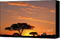 Silhouette Canvas Prints - African Sunset Canvas Print by Sebastian Musial