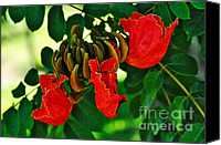 Red And Green Canvas Prints - African Tulip Tree Canvas Print by Kaye Menner