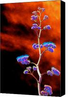 Psychedelic Canvas Prints - Agave Through Tequila Eyes Canvas Print by Richard Henne