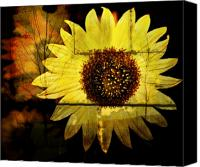 Sunflowers Canvas Prints - Aged Sunflower Canvas Print by Cathie Tyler
