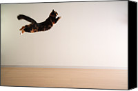 Indoors Canvas Prints - Airborne Cat Canvas Print by Junku