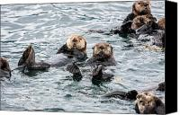 Whalen Photography Canvas Prints - Alaskan Sea Otters Canvas Print by Josh Whalen