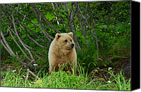 Kodiak Canvas Prints - Alaskas Poster Girl Canvas Print by Dennis Blum