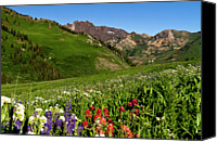 Mountain Scene Canvas Prints - Albion Basin Wildflowers Canvas Print by Rob Daugherty - RobsWildlife.com