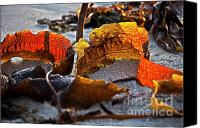 Inspirational Photograph Canvas Prints - Algae at low tide Canvas Print by Heiko Koehrer-Wagner