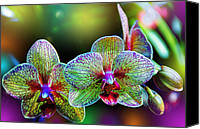 Orchidaceae Canvas Prints - Alien Orchids Canvas Print by Bill Tiepelman
