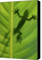 Lizard Canvas Prints - Alive Canvas Print by Dan Holm