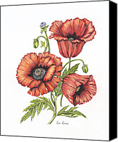 Poppy Drawings Canvas Prints - All About Poppies Canvas Print by Karen Risbeck