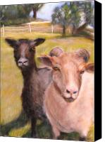 Rural Scenes Pastels Canvas Prints - All Fenced in Canvas Print by Wendie Thompson