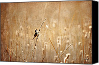 Wren Canvas Prints - All Rejoicing Canvas Print by Lois Bryan