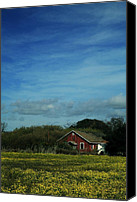Dilapidated House Canvas Prints - All That Yellow Canvas Print by Laurie Search
