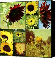 Sunflowers Canvas Prints - All the Sunflowers Canvas Print by Cathie Tyler