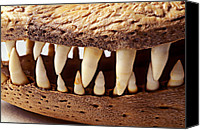 Jaws Canvas Prints - Alligator skull teeth Canvas Print by Garry Gay
