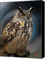 Colette Canvas Prints - Almeria Wise Owl living in Spain  Canvas Print by Colette Hera  Guggenheim