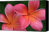 Hawaiian Islands Canvas Prints - Aloha Hawaii Kalama O Nei Pink Tropical Plumeria Canvas Print by Sharon Mau