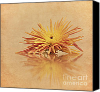 Orange Flower Photo Canvas Prints - Alone Canvas Print by Kristin Kreet