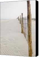 Assateague Canvas Prints - Along the Shore Canvas Print by Matthew Saindon