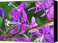 Alpine Mixed Media Canvas Prints - Alpine Fireweed - Seasonal Outdoors Wildflower Canvas Print by Photography Moments - Sandi